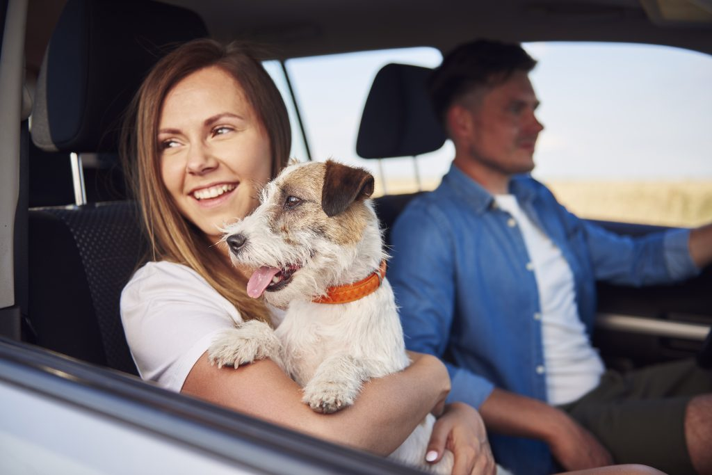 Couple driving down the highway with their dog.