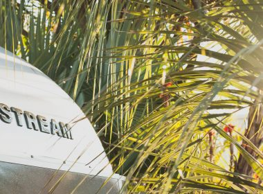 Close up of the Airstream name on a trailer with palm fronds in the background.